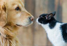mascotas, gato, perro